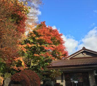 美しい文化遺産「櫻井家住宅」と癒しの「清聴庵」を楽しむ