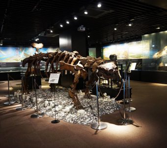 常に進化を続ける、泊まれる博物館。