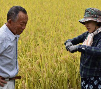 奥出雲町で安心・安全なお米を作りたい!